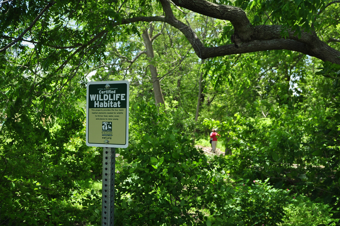 certified wildlife habitat at Buttonwood Park