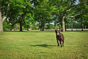 dog playing fetch with ball at Buttonwood Park