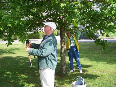 a volunteer prunes a tree in Buttonwood Park