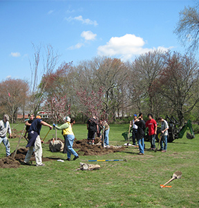 people planting trees in Buttonwood Park in New Bedford
