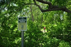 certified wildlife habitat at Buttonwood Park