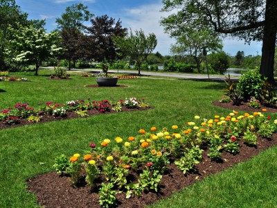 flowers in a garden at Buttonwood Park